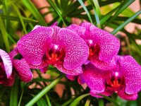 orchid-608172_1920