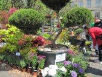 818858bada Újra megrendezésre kerül a Tavaszkert Dísznövény Szakkiállítás és Vásár.  Egy egyszerű kérdésre adott egyetlen válasszal ...